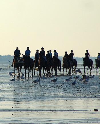 Cavaliers et leurs chevaux sur la plage
