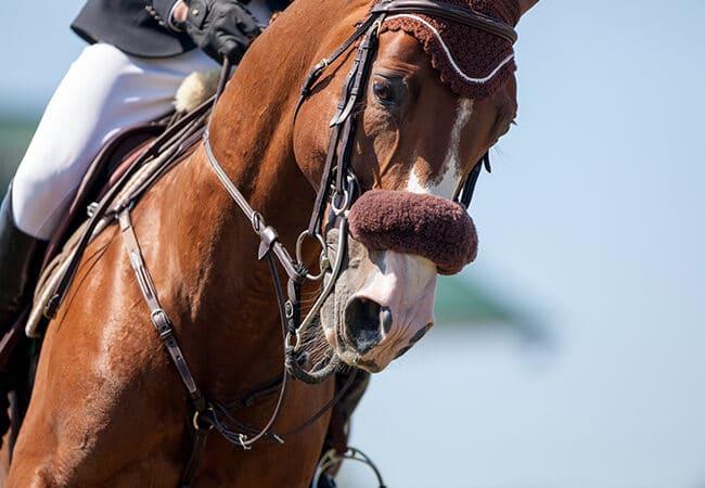 Cheval et son cavalier pendant un concours de saut d'obstacle