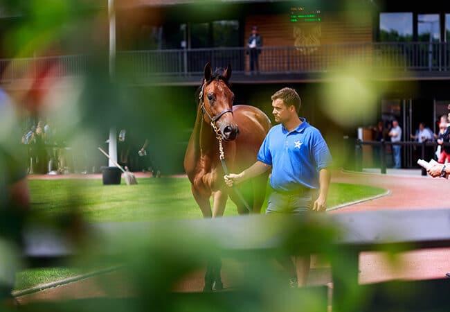 Homme présentant un cheval pendant une vente de pur-sang anglais à deauville