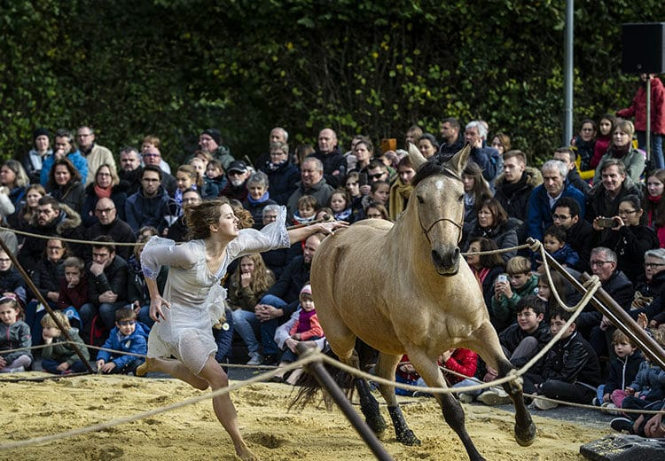 Spectacle cheval