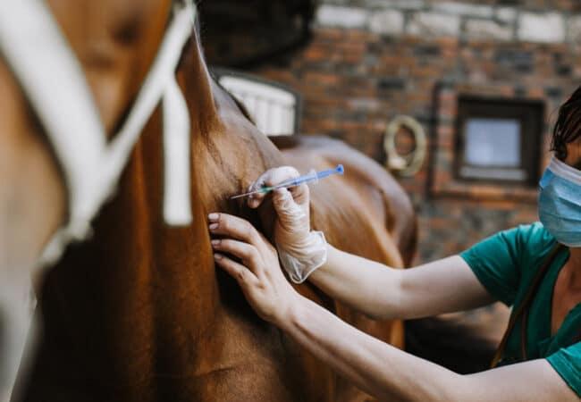 Femme faisant des soins vétérinaires à un cheval